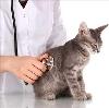 Ветеринарные клиники в Восходе